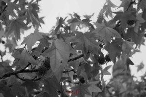 BX Photo Walk-60