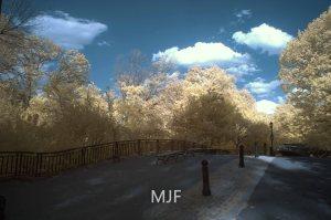 IMG_0375 -1