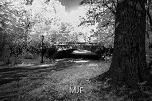 IMG_0381 -1-Edit