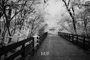 IMG_0383 -1-Edit