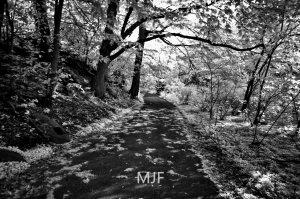 IMG_0389 -1-Edit
