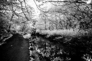 IMG_0390 -1-Edit