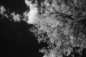 IMG_0391 -1-Edit