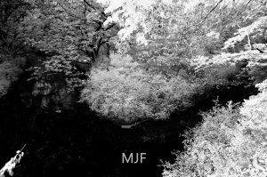 IMG_0393 -1-Edit