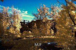 IMG_0524 -1 - Copy