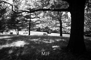 IMG_9031 -1-Edit